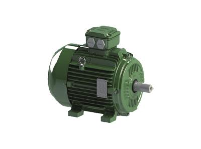 W21 - Cast Iron Frame three phase induction motor